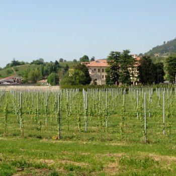 pali-per-viticoltura