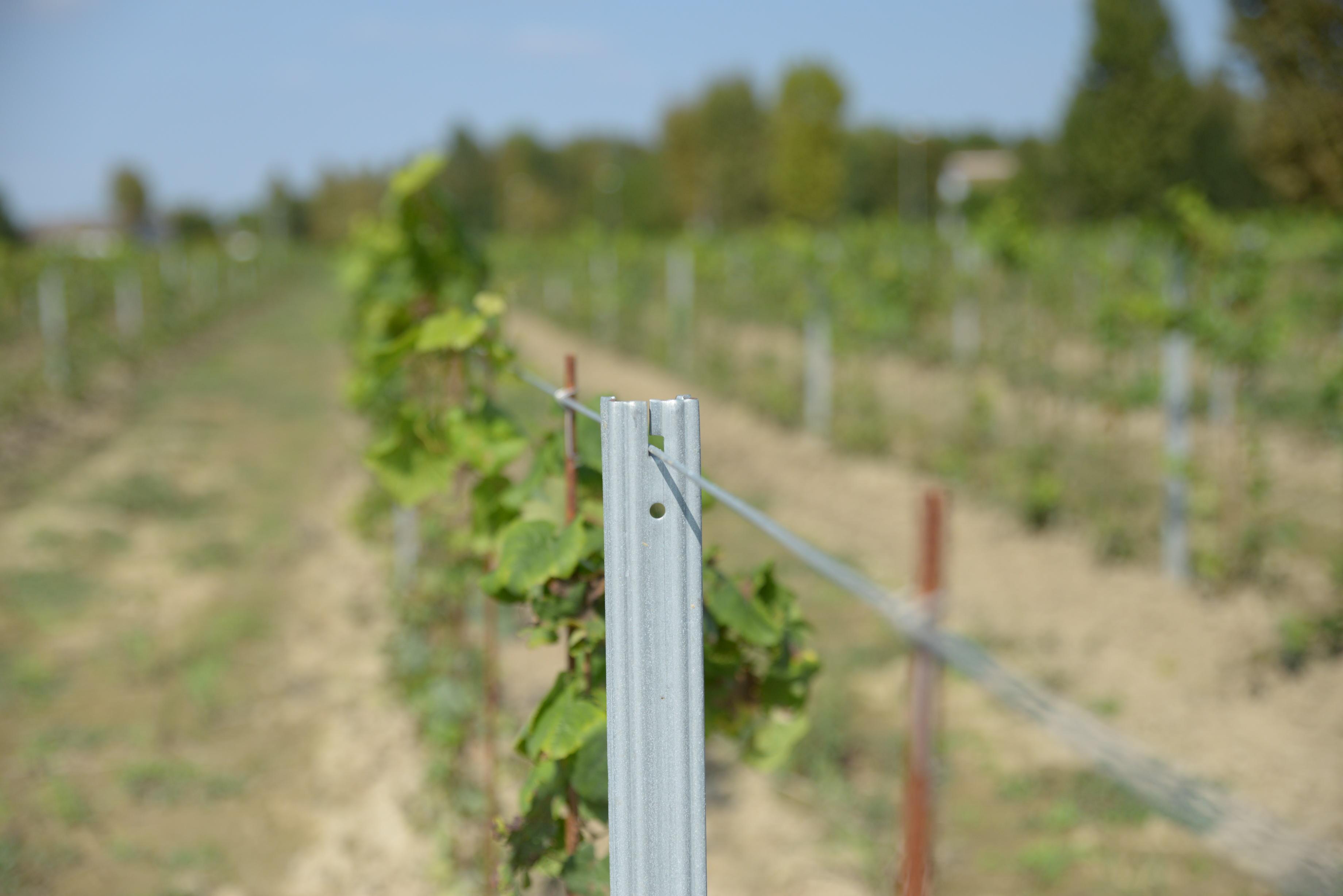 Pali per viticoltura