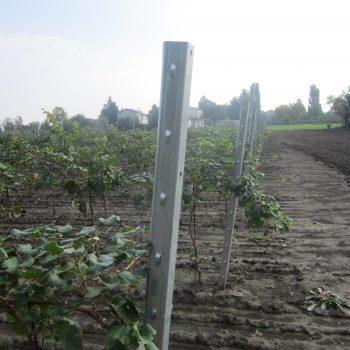 pali-viticoltura