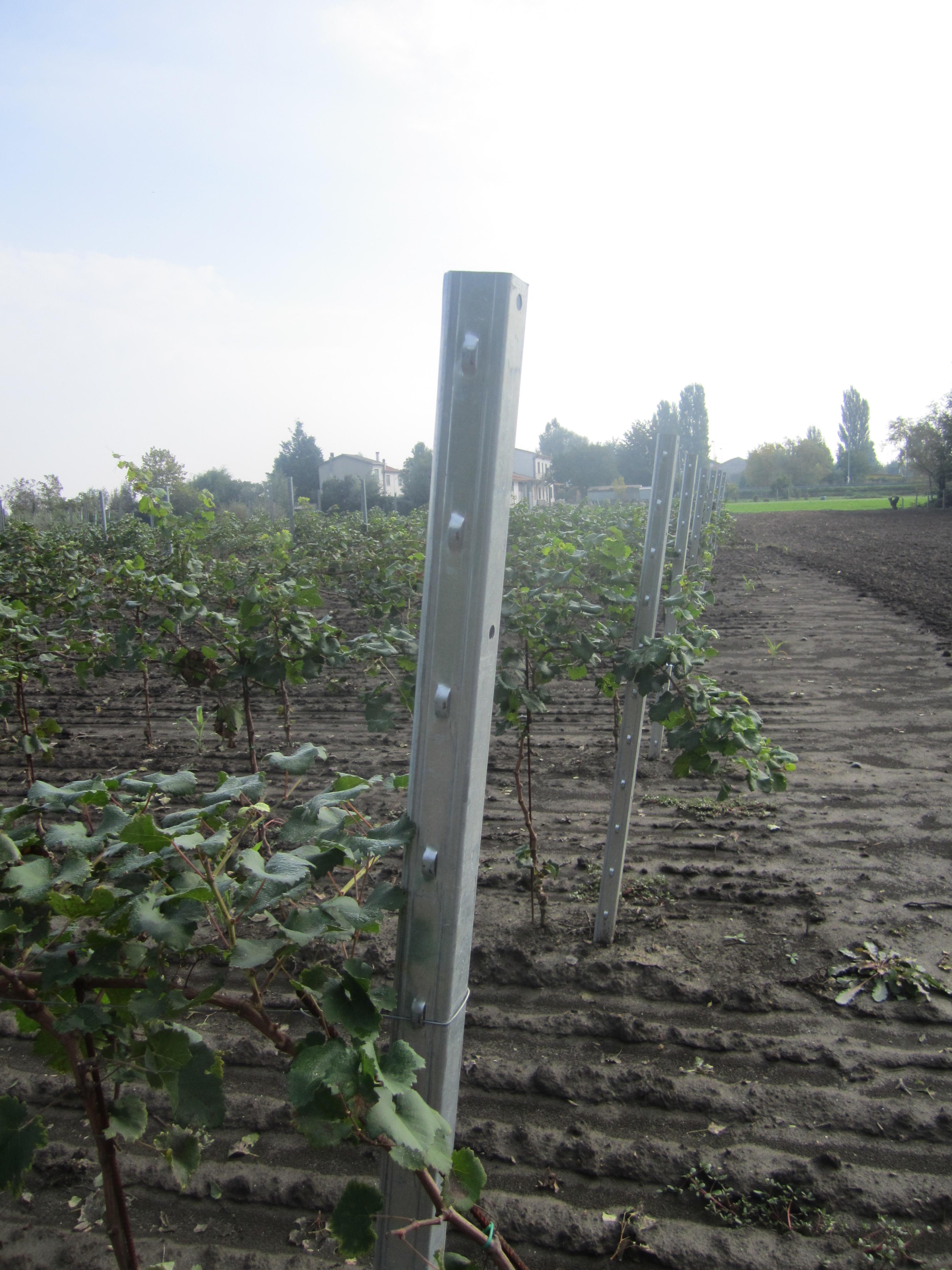 Pali per viticoltura pali per vigna padova pali per for Pali in plastica per vigneto