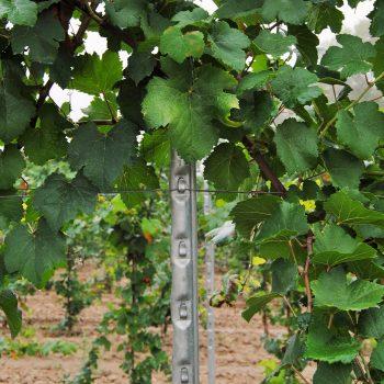Palo per viticoltura